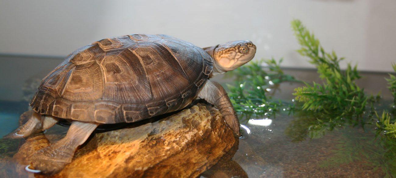 L mparas para tortugas for Filtro para estanque de tortugas